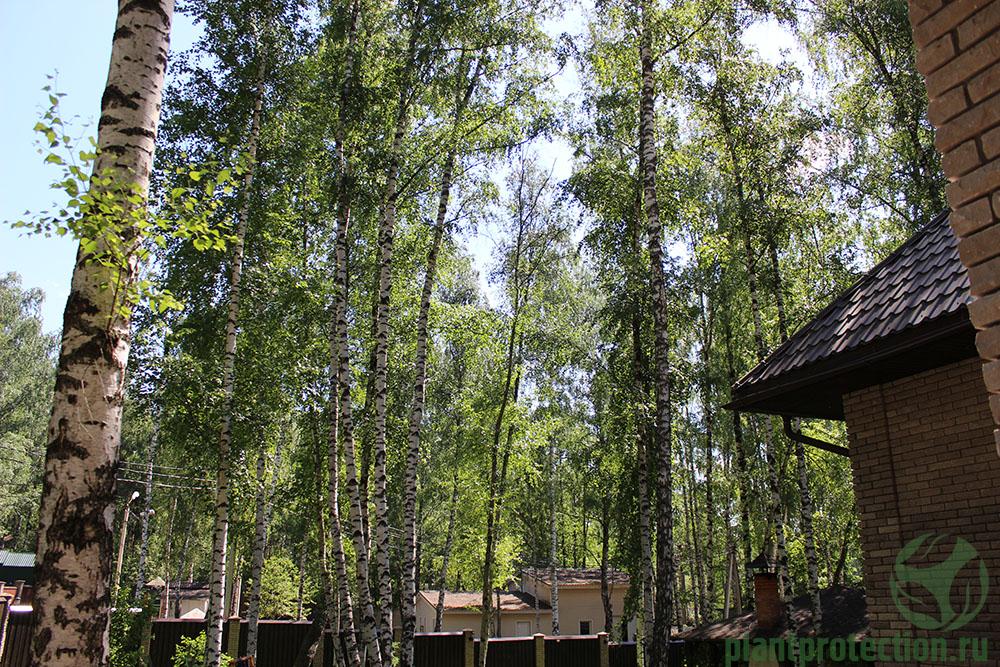 Лесной участок в аренде