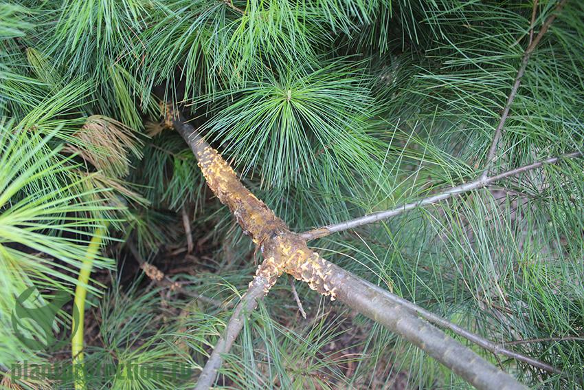 Лечение болезней деревьев