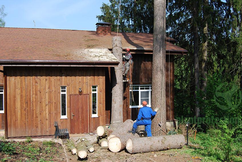 Дерево, спиленное рядом с домом.