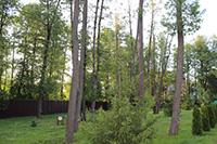 Защита лесных деревьев