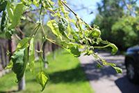 Услуги по защите растений