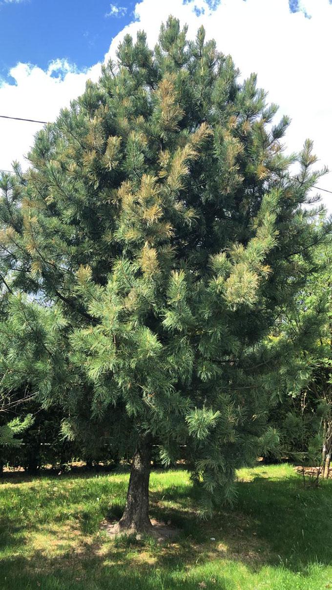 Лечение деревьев, фото №1