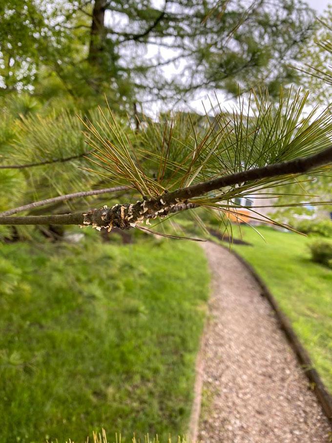 Лечение деревьев, фото №2