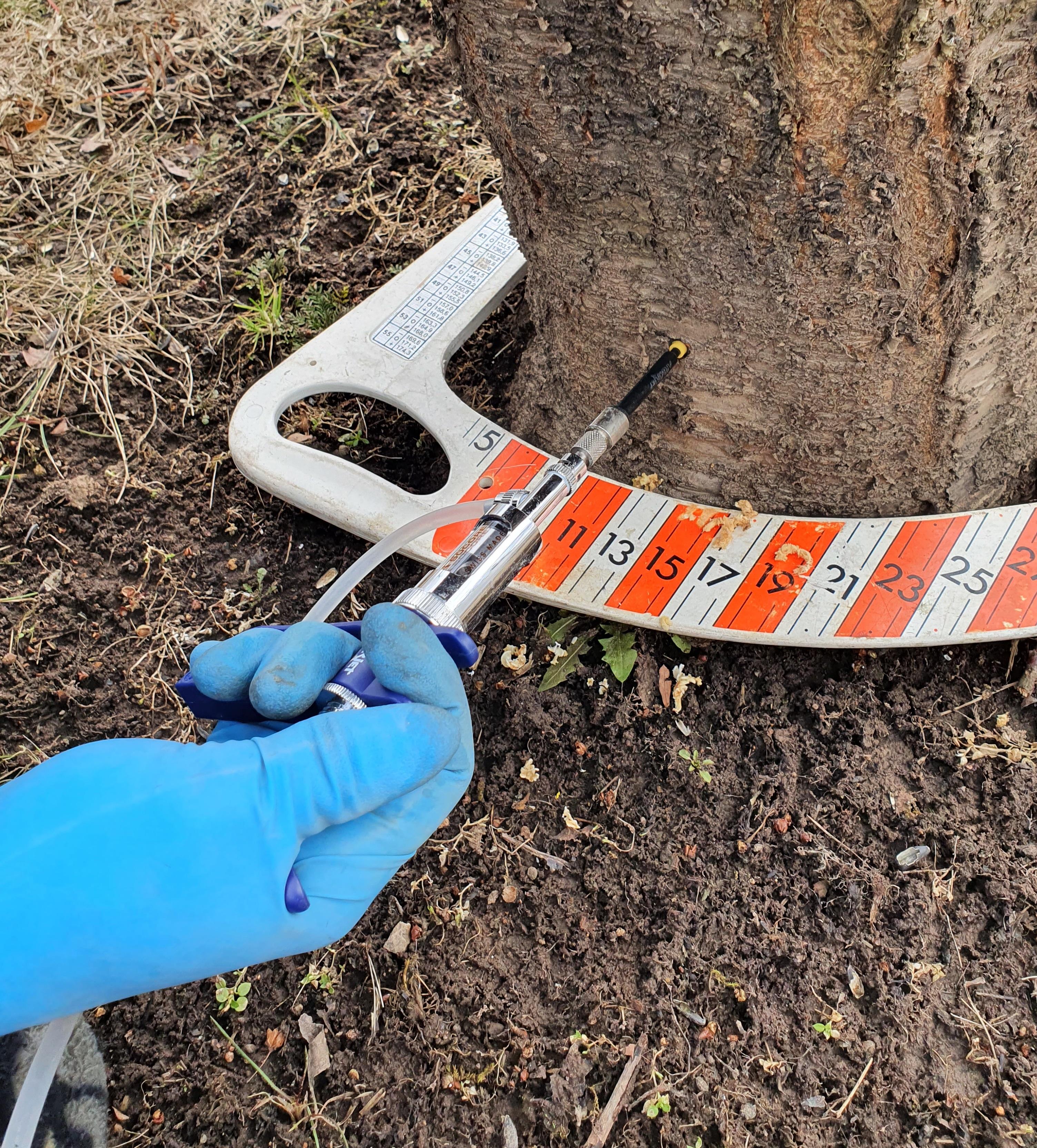 Шприцевание деревьев