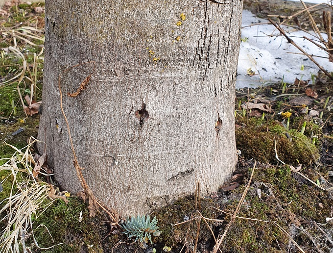 Стволовые инъекции дереву
